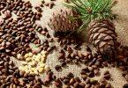 Польза и вред очищенных кедровых орешков