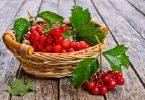Польза калины красной для здоровья