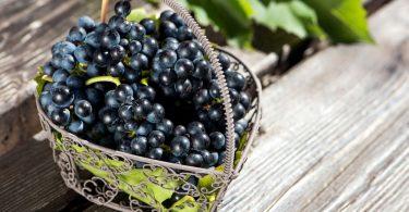 Черный виноград: польза и вред