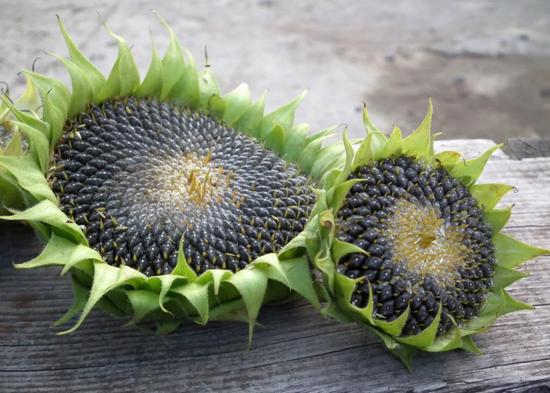 Подсолнечные семена
