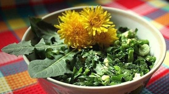 Полезные качества одуванчикового салатика