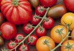 В чем польза томатов?