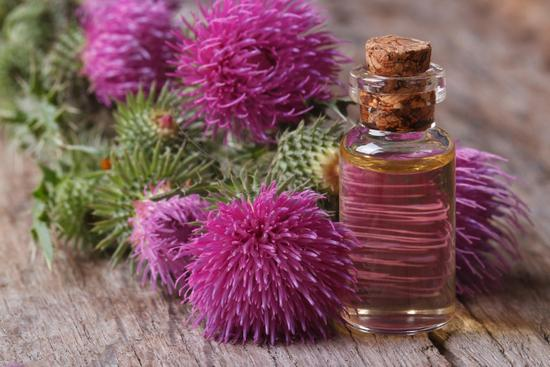 Расторопша (масло): польза и вред для организма