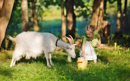 Козье молоко: польза
