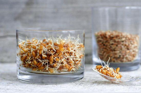 Проращивание зерен пшеницы в домашних условиях