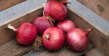 Красный лук: польза и вред