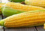 В чем польза и вред молодой вареной кукурузы?