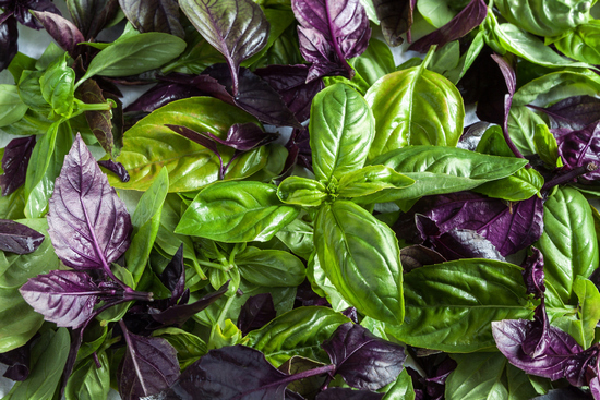 Базилик: польза пряной травы для здоровья человека