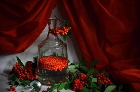 Настойка на плодах рябины и водке