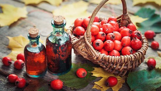 Ягоды боярышника: польза и вред для организма