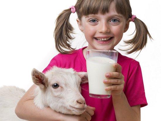 Особые свойства козьего молока