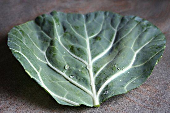 Лечебные свойства капусты белокочанной