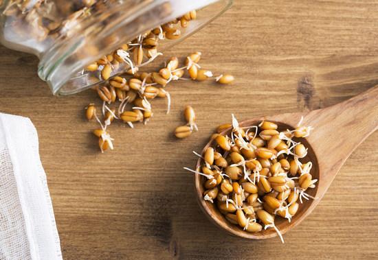 Пророщенные зерна пшеницы: польза и вред